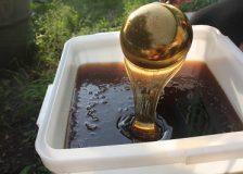 Полезные свойства и противопоказания гречишного меда — актуальная информация!