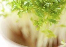 Лучшие зимние диеты для похудения. ТОП-5