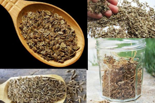 противопоказания к применению семян укропа для похудения
